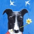 Greyhound Spring
