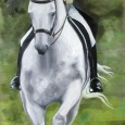 Dressage, The Grey